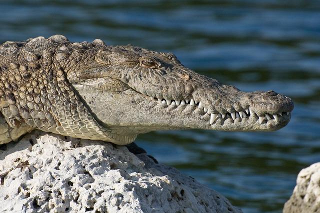 biscayne-national-park-80457_640